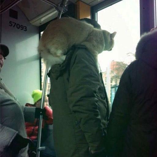 5dc3d4bc46696 BI0Bnz1BYCk - Conta do Instagram compartilha as coisas mais estranhas do transporte público