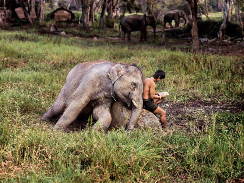 5dce5d255896b x 5dc9dc97eca63  880 - 40 fotografias de Steve McCurry que exploram a relação entre humanos e animais