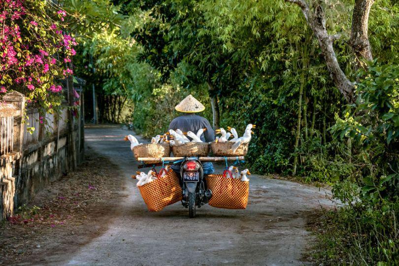 5dce5d27d21be x 5dc9df2deb3b2  880 - 40 fotografias de Steve McCurry que exploram a relação entre humanos e animais