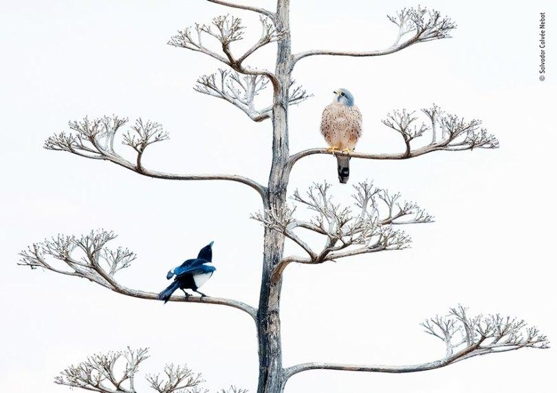 5def5c34c4abb wildlife photographer of the year lumix peoples choice awards 2019 finalists 5 5dee1c6235fa2  880 - Fotos incríveis da People's Choice do concurso de fotógrafo de vida selvagem 2019