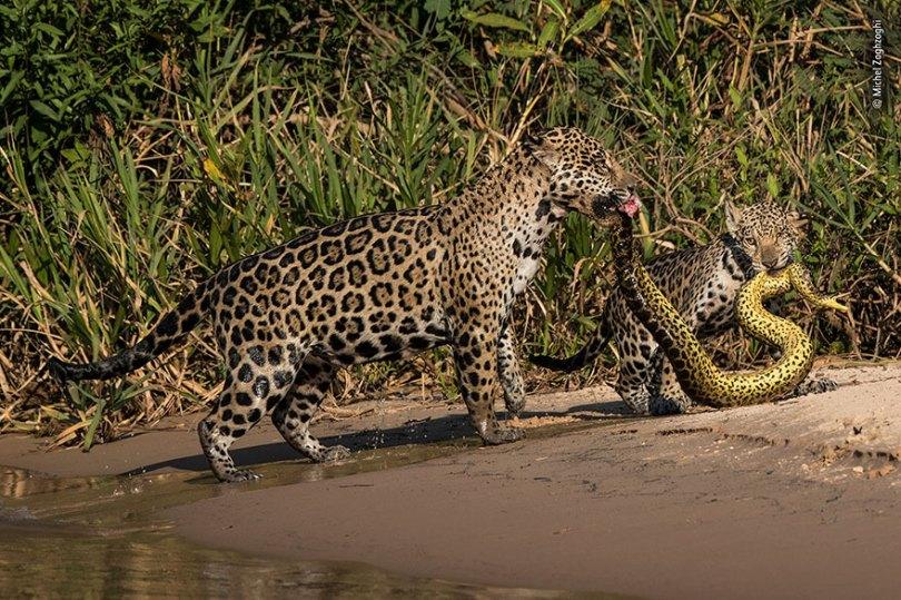5def5c352ce02 wildlife photographer of the year lumix peoples choice awards 2019 finalists 8 5dee1c67c2427  880 - Fotos incríveis da People's Choice do concurso de fotógrafo de vida selvagem 2019