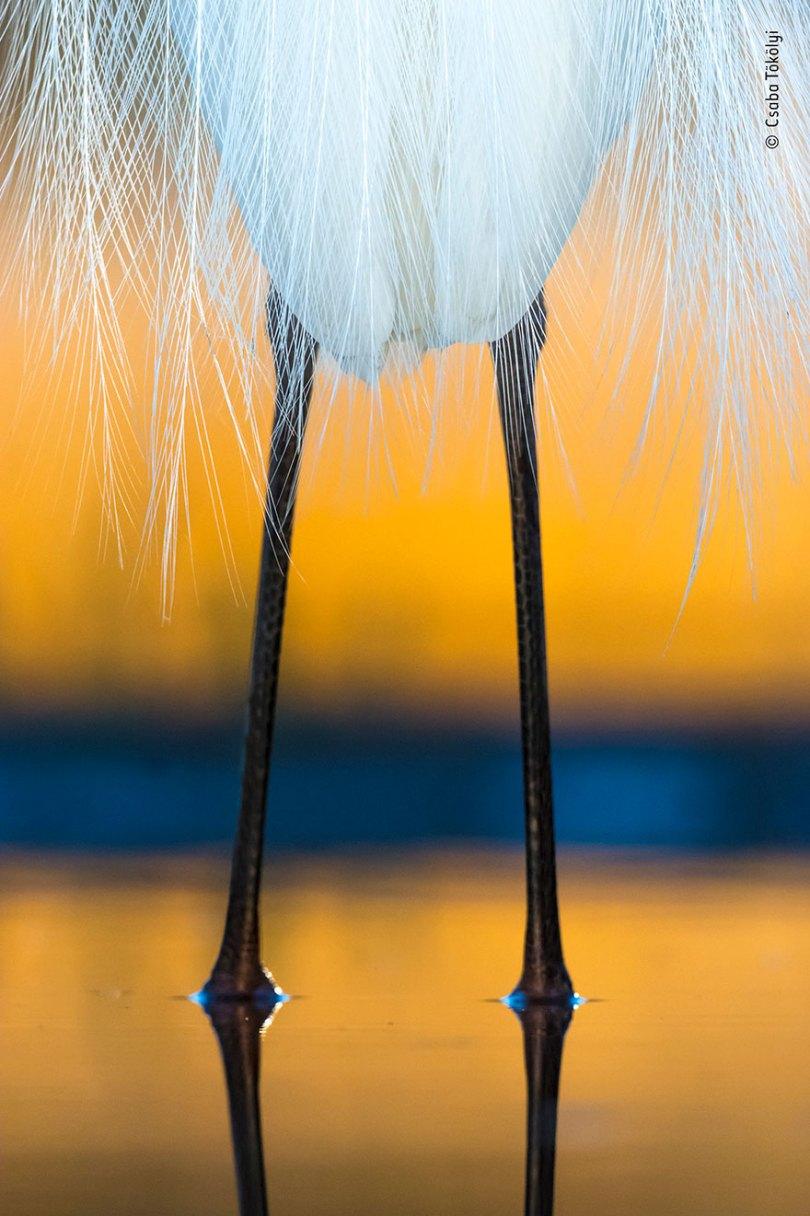 5def5c35888ec wildlife photographer of the year lumix peoples choice awards 2019 finalists 11 5dee1c6cd145d  880 - Fotos incríveis da People's Choice do concurso de fotógrafo de vida selvagem 2019
