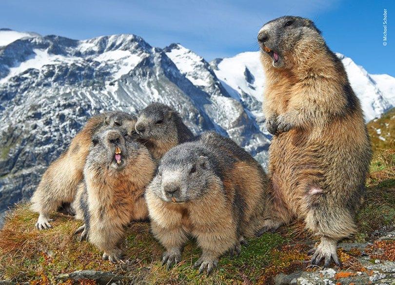 5def5c35d2595 wildlife photographer of the year lumix peoples choice awards 2019 finalists 24 5dee1c834b758  880 - Fotos incríveis da People's Choice do concurso de fotógrafo de vida selvagem 2019