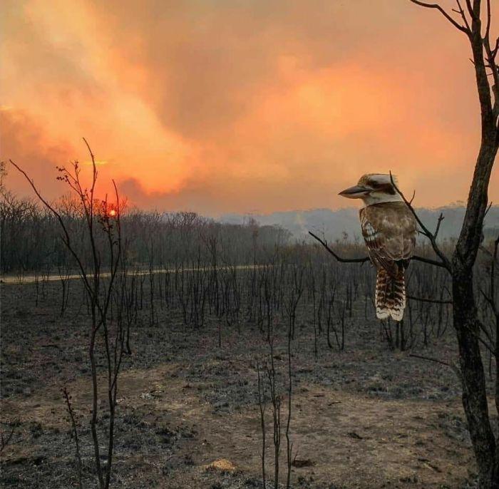 5e144303ba7c2 5e12f04a11f7b lkf4gdj4kk741  700 - Internet compatilha 50 fotos que revelam as queimadas na Austrália