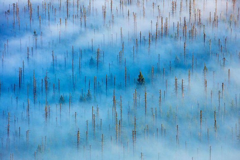 5eb2623d8c2da gdt nature photographer of the year 2020 5eb10fac5b115  880 - As melhores fotografias da Natureza - Concurso GDT 2020