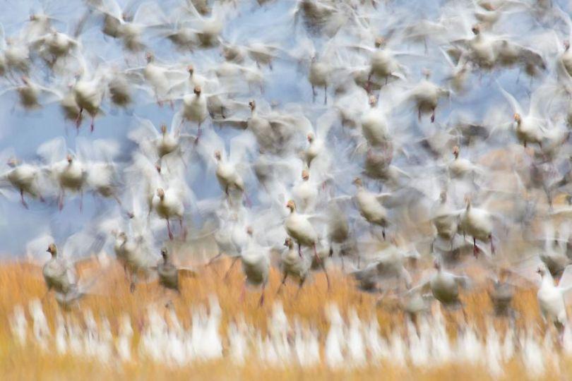 5eb2623f2d691 1 5eb1045e12d6e  880 - As melhores fotografias da Natureza - Concurso GDT 2020