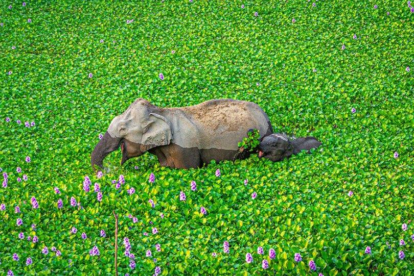 5f5b7bb43c3e9 20 5f5a1c595487c  880 - As fotos mais fofas e engraçadas de 2020 do mundo animal!