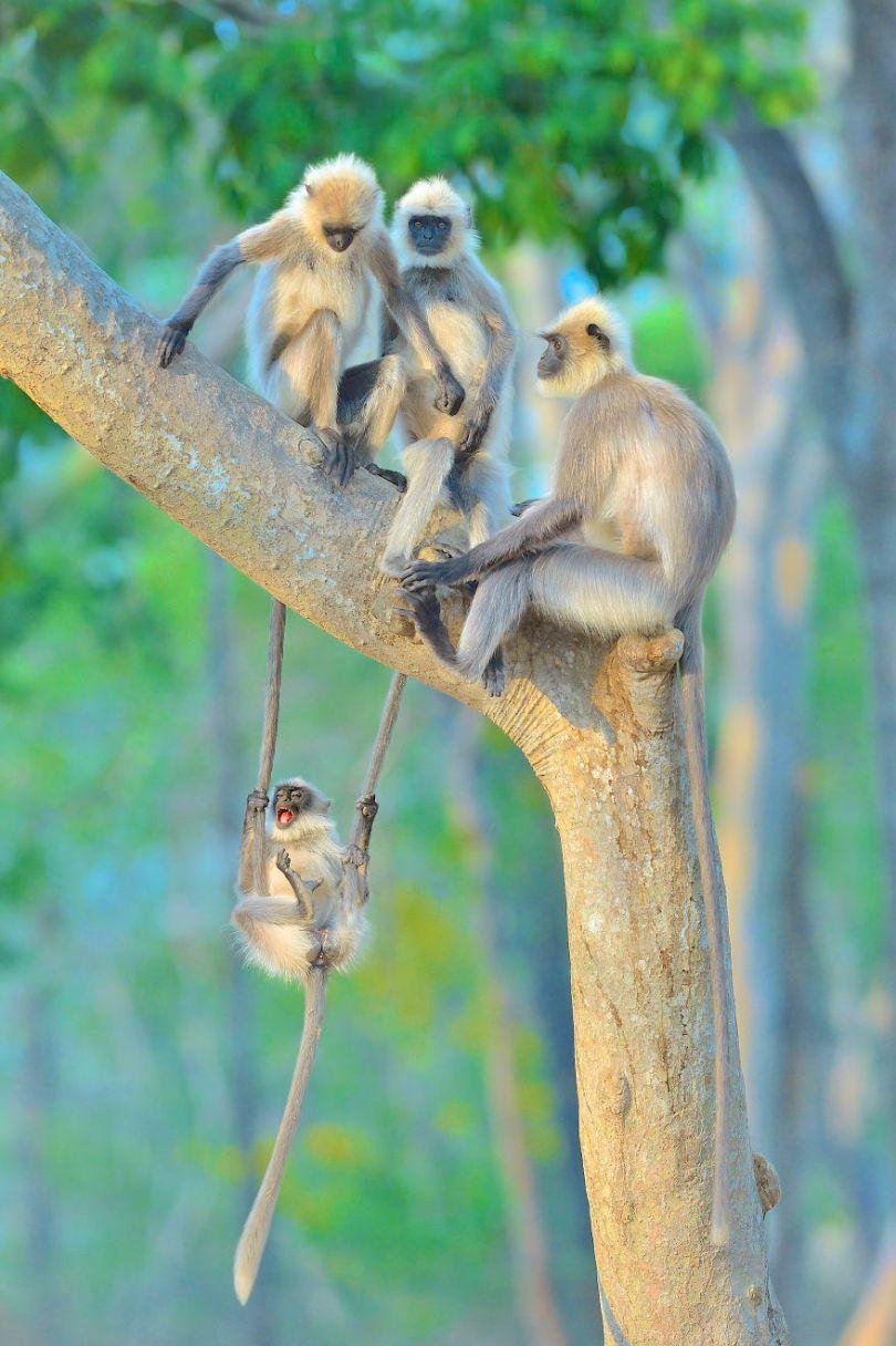 5f5b7bb5105c1 Thomas Vijayan 5f5a215f73599  880 - As fotos mais fofas e engraçadas de 2020 do mundo animal!