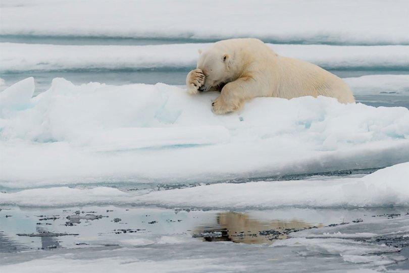 5f5b7bba14285 13 5f5a1895acf2a  880 - As fotos mais fofas e engraçadas de 2020 do mundo animal!