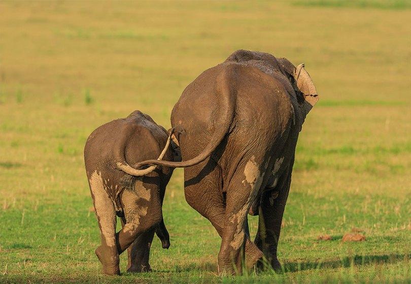 5f5b7bbad563c 14 5f5a18e3e3a1f  880 - As fotos mais fofas e engraçadas de 2020 do mundo animal!