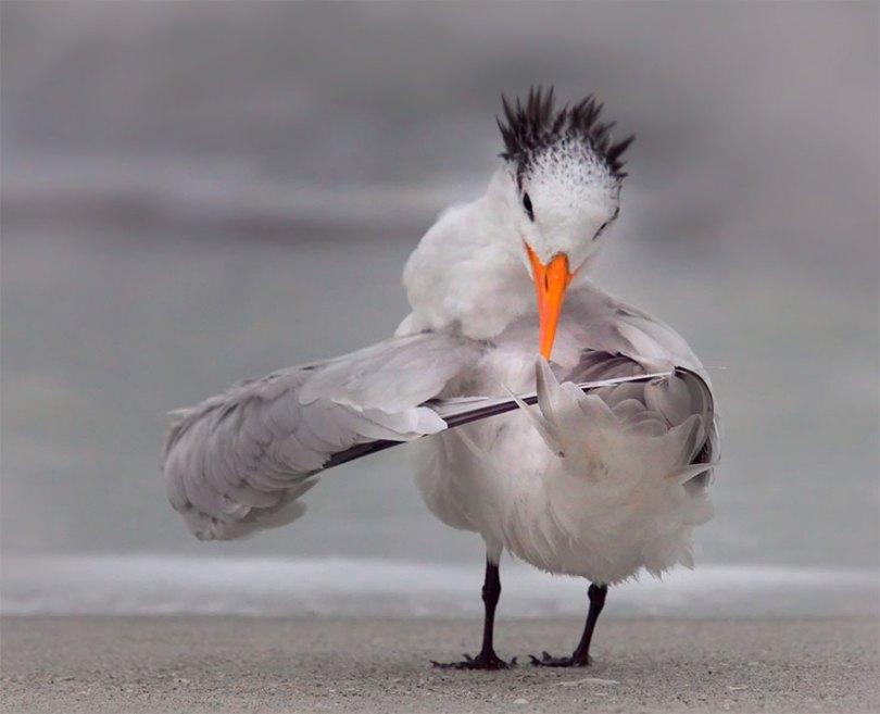 5f5b7bbba2917 8 5f5a1708440b6  880 - As fotos mais fofas e engraçadas de 2020 do mundo animal!