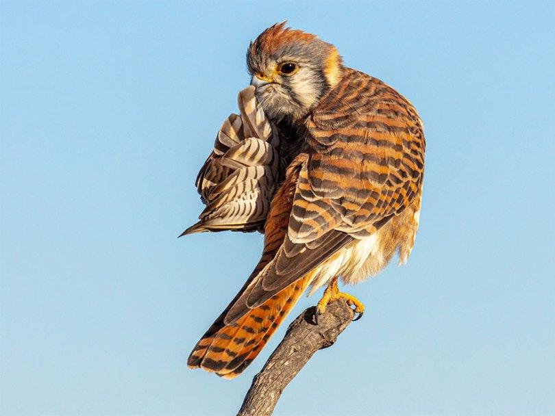 5f5b7bbe3b0c2 29 5f5a1f5864826  880 - As fotos mais fofas e engraçadas de 2020 do mundo animal!