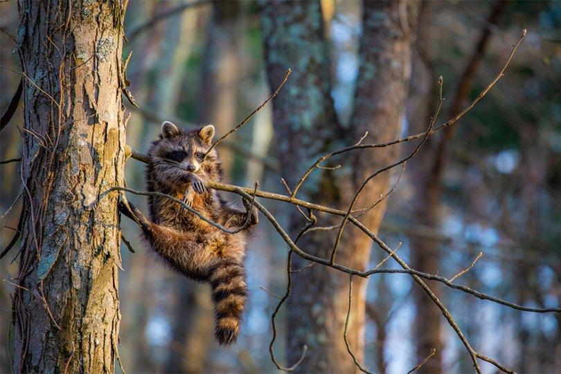 5f5b7bc046dba 16 5f5a197845f6c  880 - As fotos mais fofas e engraçadas de 2020 do mundo animal!