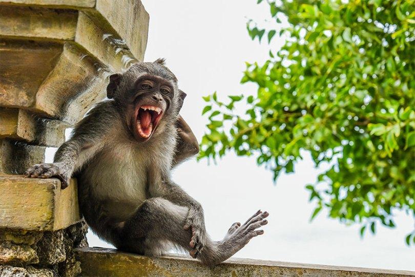 5f5b7bc44e4a9 22 5f5a1d09cc2cd  880 - As fotos mais fofas e engraçadas de 2020 do mundo animal!