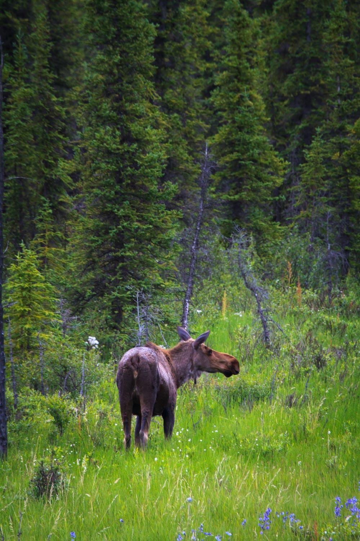 Alaskan Photo Tours Activities And Attractions In Denali