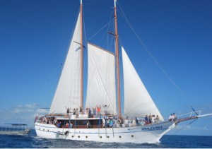 Oceanic Schooner – Whale's Tale
