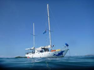 Pelorus Jack Sailing