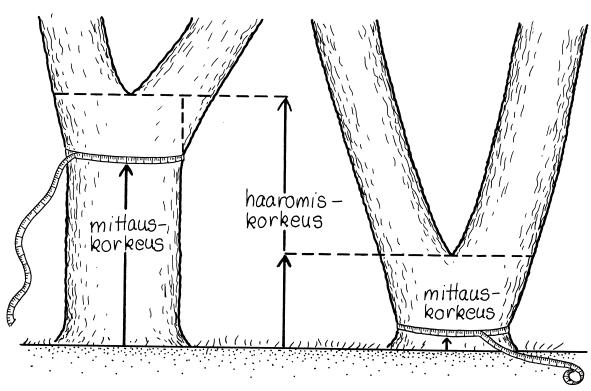 Puun paksuuden mittaus