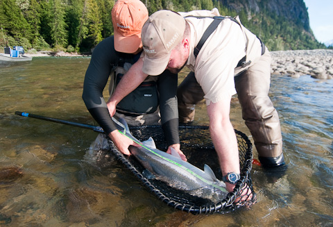 Measuring Steelhead