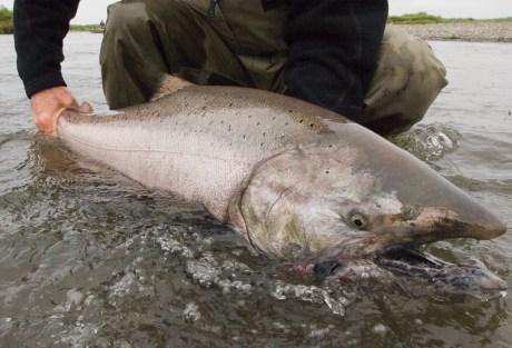 Scott King Salmon Rod