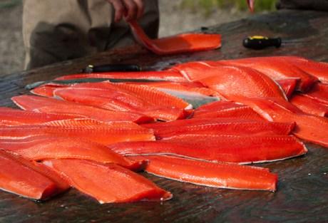 Sanders Salmon