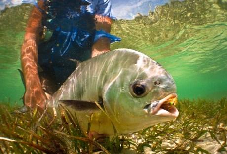 Permit Underwater