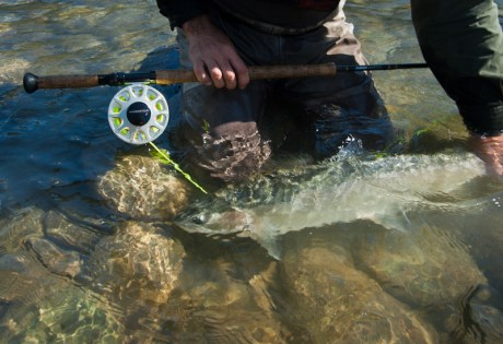 Steelhead Articles