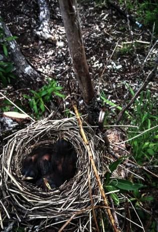 Birds on the Island-2