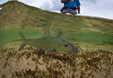 Fishing Conservation