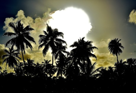 Andros Island Pictures - Palm Trees
