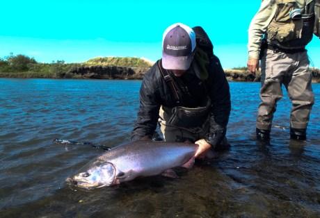 King Salmon From Alaska West