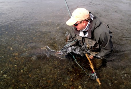 Fly Fishing for Chum Salmon