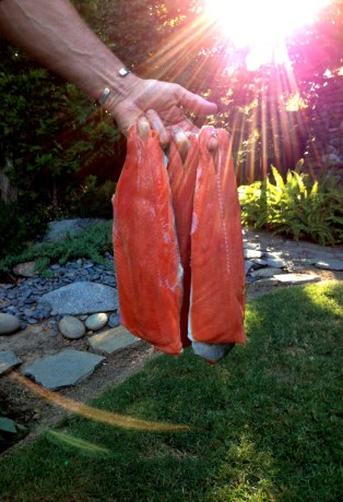Fresh Salmon from Alaska West