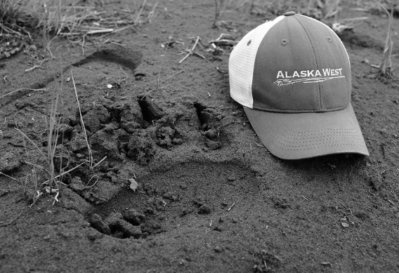 Brown bear track at Alaska West