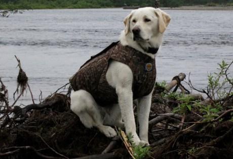 Camp Dogs at Alaska West