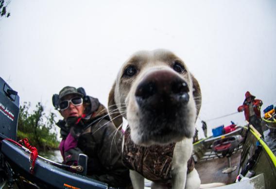 Camp dog at Alaska West