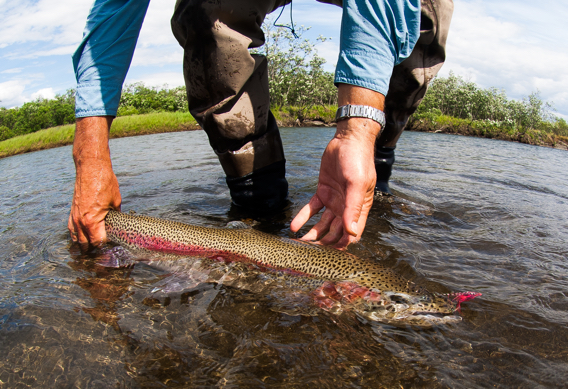 Leopard Rainbow Trout from Western Alaska by Tosh Brown.
