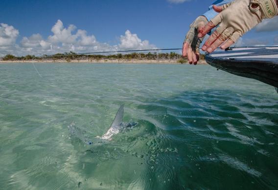 Releasing bonefish by Ryan Durkin.