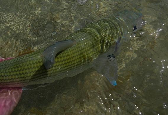 Fly fishing for bonefish by Flip McCririck.