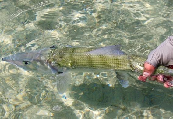 7d354672825e Bonefishing for Beginners – Roundup