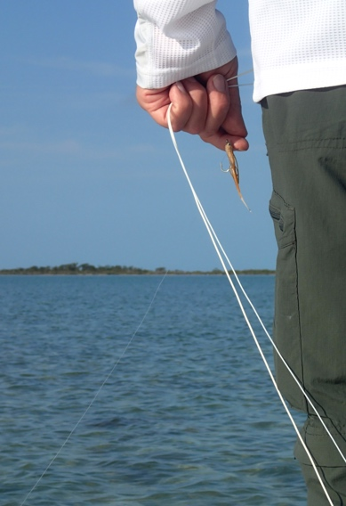 Selecting bonefish flies