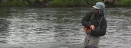 Pulsing the rod while swinging flies for salmon and steelhead