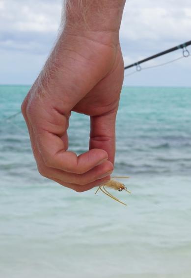 Bonefish ready position
