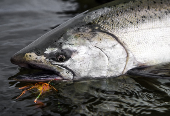 Greg Houskas Kriller fly pattern for salmon and steelhead