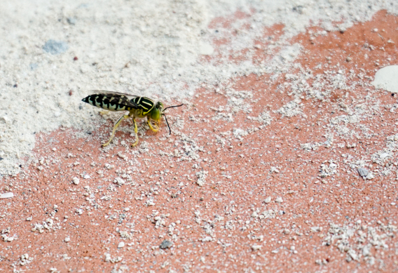 Doctor fly killers in the Bahamas