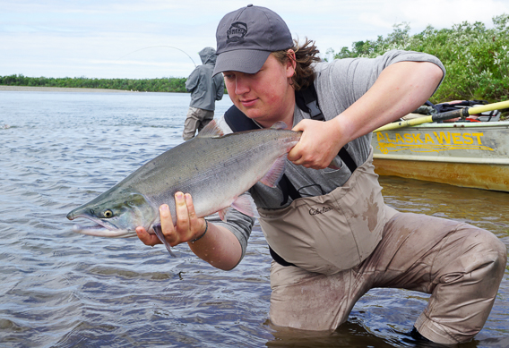 Pink salmon from Alaska West