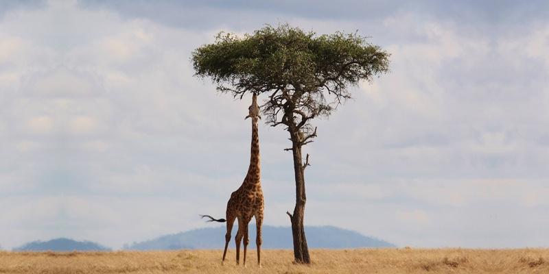 Kenya park entry fee