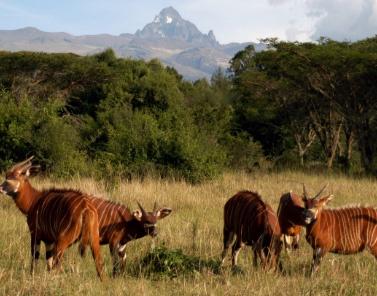 Nukuru-Masi-Mara-Safari