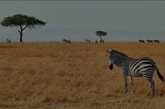 budget-safaris
