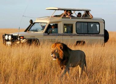 kenya-safaris